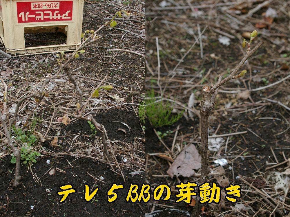 1tereki0420c1.jpg