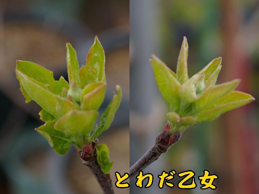 1towada0403c1.jpg
