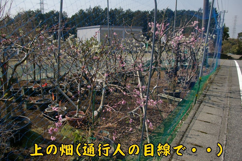 1uenohatake0328c1.jpg