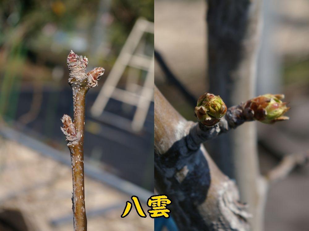 1yakumo0321c1.jpg