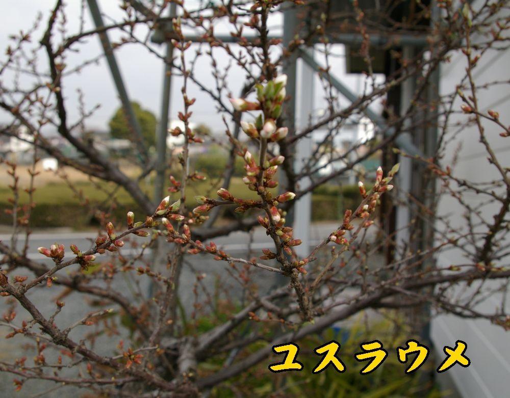 1yusura0319c1.jpg
