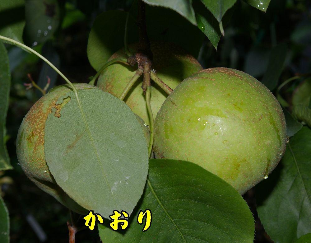 2kaori0816c1.jpg