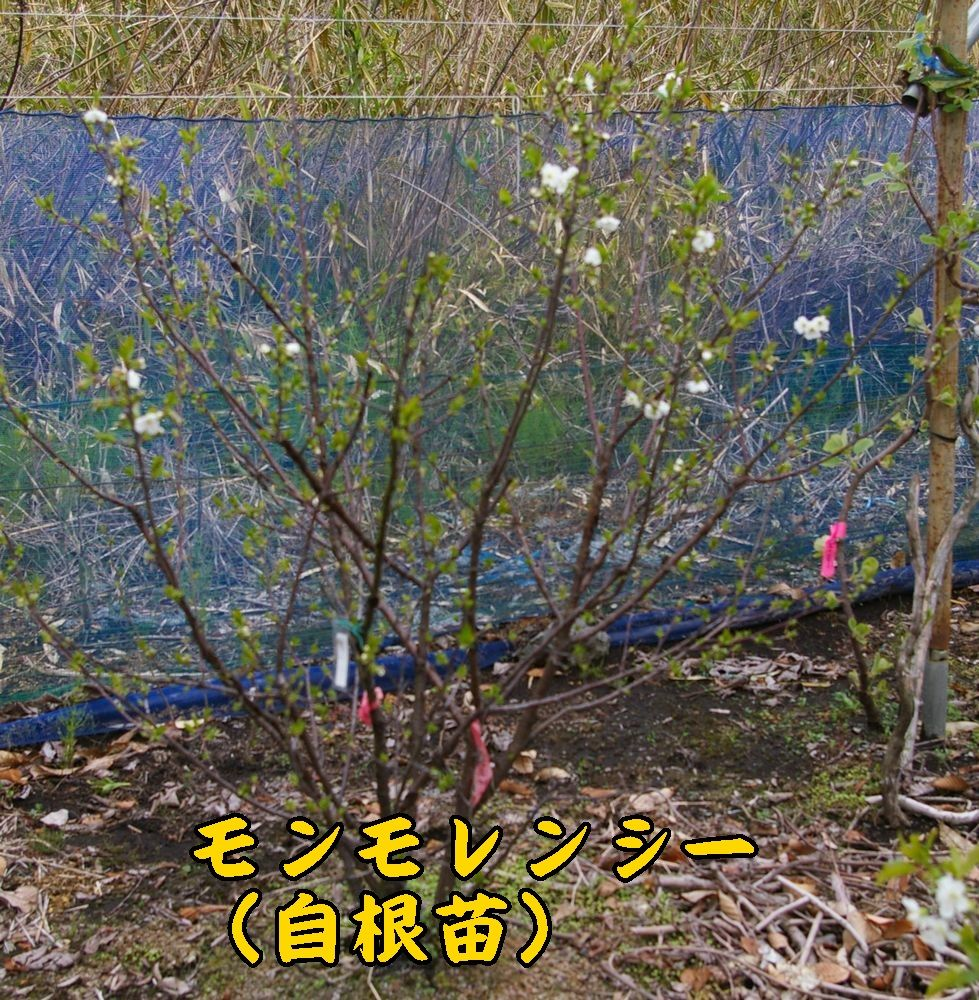 3sankao0420c1.jpg