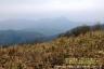 ⑪明神ヶ岳、金時山