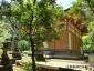 拝殿と古木イチョウ