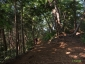 日影沢へ、いろはの森1