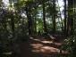 日影沢へ、いろはの森3