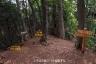 いろはの森コースと交叉