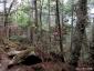 砂払いノ頭~大日岩、シャクナゲ