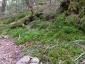 飯森山南面1、苔むした原生林