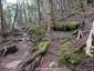 飯森山南面2、苔むした原生林