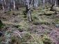 飯森山南面3、苔むした原生林