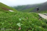 ∴秋田駒ヶ岳高山植物帯