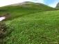 チングルマの群落3(ムーミン谷)