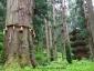 爺杉と五重塔