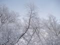 20140226_カラマツの霧氷