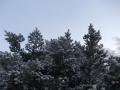 20140226_トドマツの霧氷
