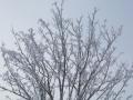 20140226_庭のナナカマドの霧氷