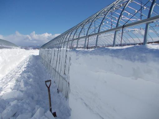 20140312_1番ハウス除雪3