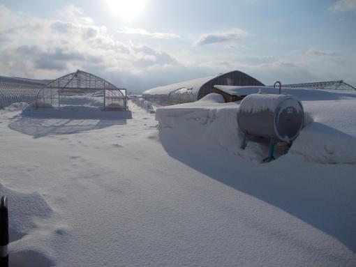 20130401_雪降りました~