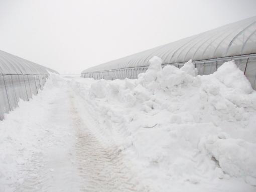 20140322_通路の雪