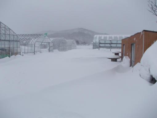 20120404_吹雪の始まり