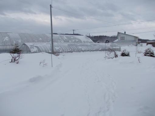 20140407_吹雪のあと