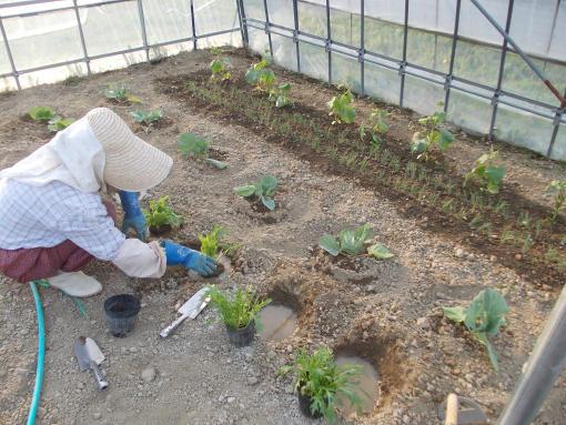 20140520_自家用野菜苗定植