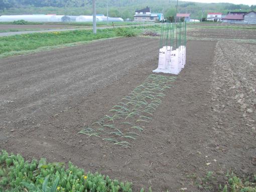 20140525_自家用畑