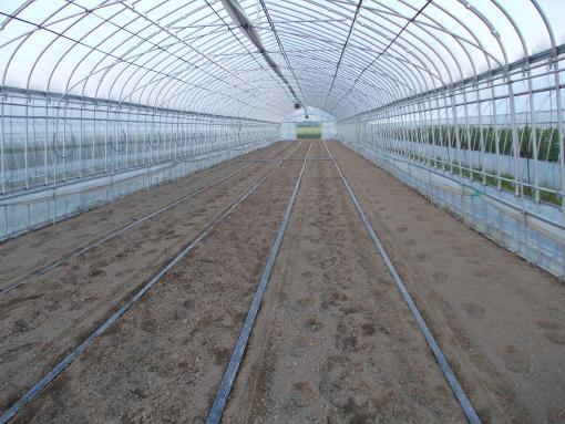 20140624_ハウスサヤ畑準備
