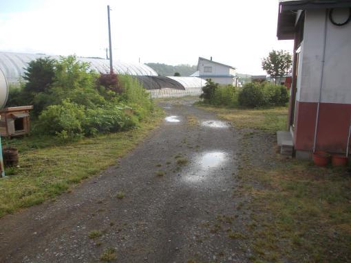 20140630_水溜りができた雨上がり