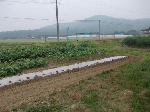 20140726_秋野菜播種後