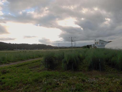 20140813_流れる雲