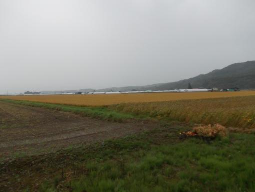 20140904_雨降り