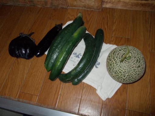 20140906_本日の収穫物