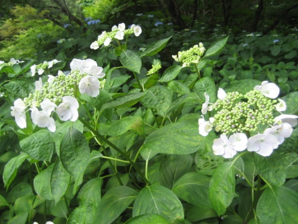 140615府立植物園⑨