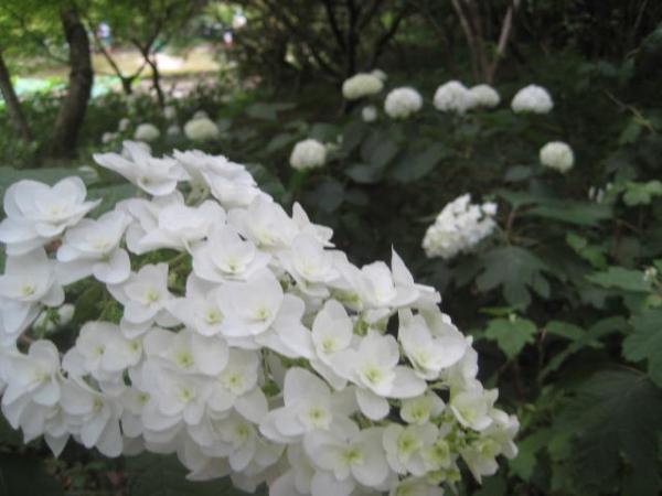 140615府立植物園⑩
