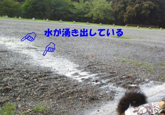 140826御所さんぽ・砂利道に小川が出現