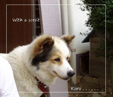 koro20140522.jpg
