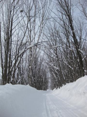 森の道0220