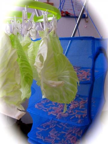 干し野菜0226
