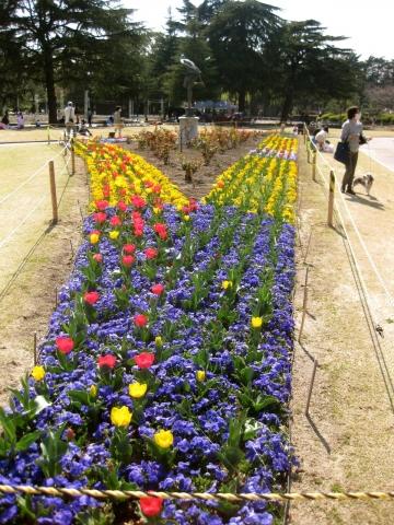 公園の花0328