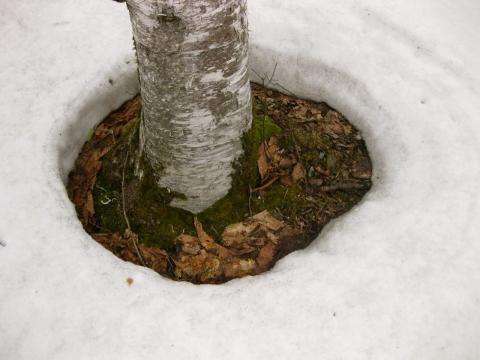 木のまわり0418