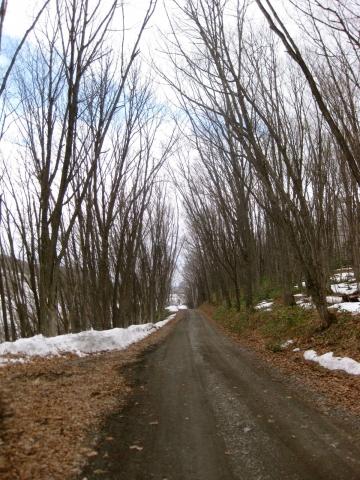 森の道0418