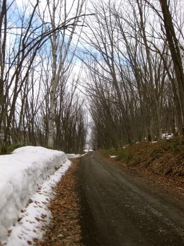 森の道04191
