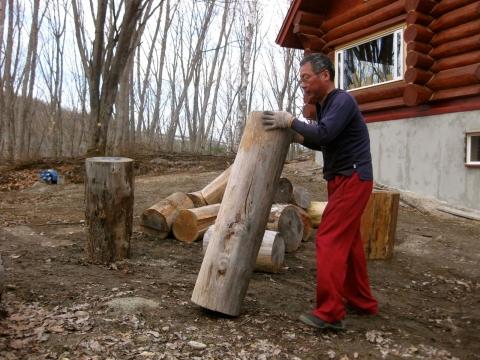 大きな木を運ぶ0501
