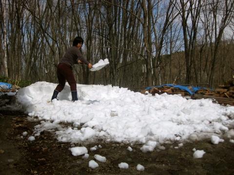雪割り0501
