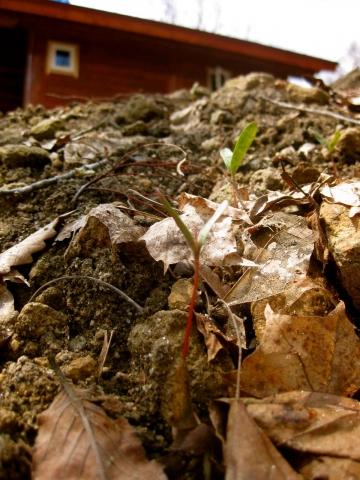 芽が出た0507