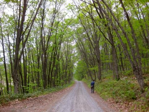 森の道0526