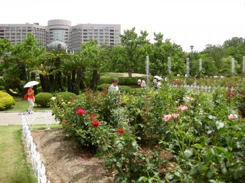 鶴舞公園と病院0612